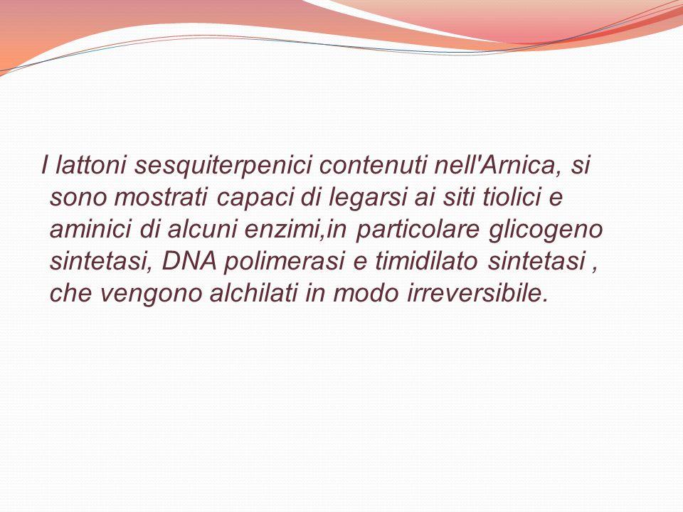 I lattoni sesquiterpenici contenuti nell Arnica, si sono mostrati capaci di legarsi ai siti tiolici e aminici di alcuni enzimi,in particolare glicogeno sintetasi, DNA polimerasi e timidilato sintetasi , che vengono alchilati in modo irreversibile.