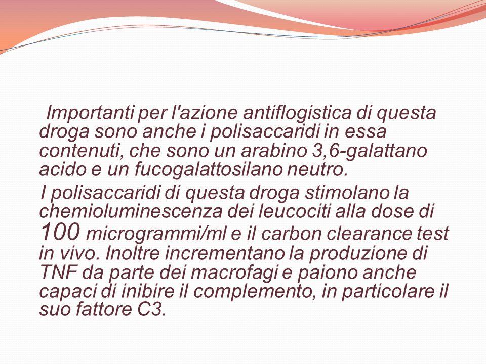 Importanti per l azione antiflogistica di questa droga sono anche i polisaccaridi in essa contenuti, che sono un arabino 3,6-galattano acido e un fucogalattosilano neutro.