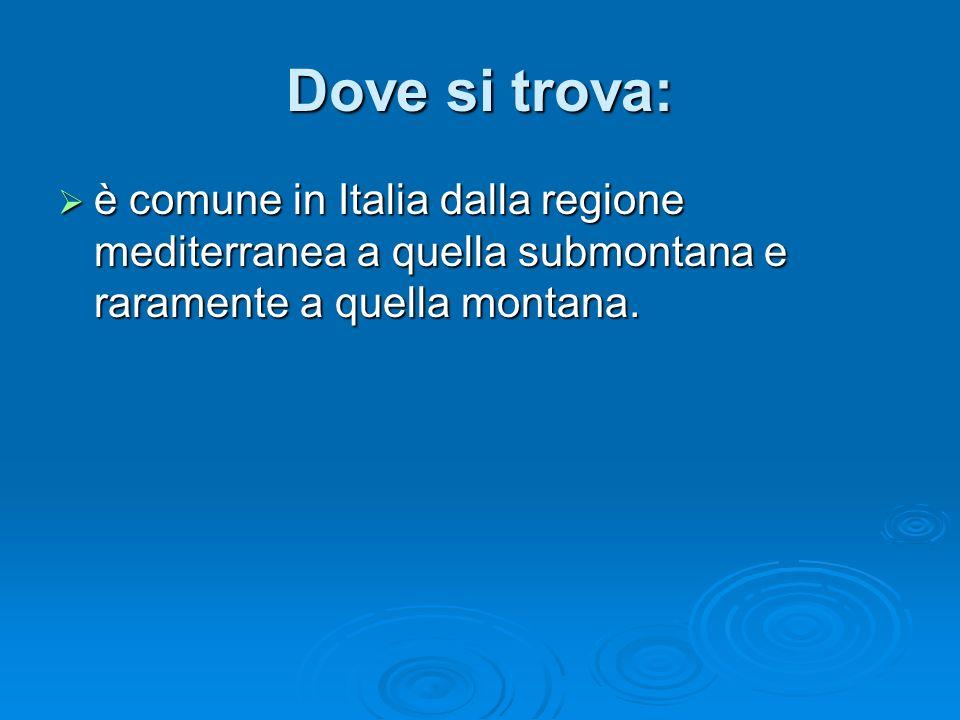Dove si trova: è comune in Italia dalla regione mediterranea a quella submontana e raramente a quella montana.