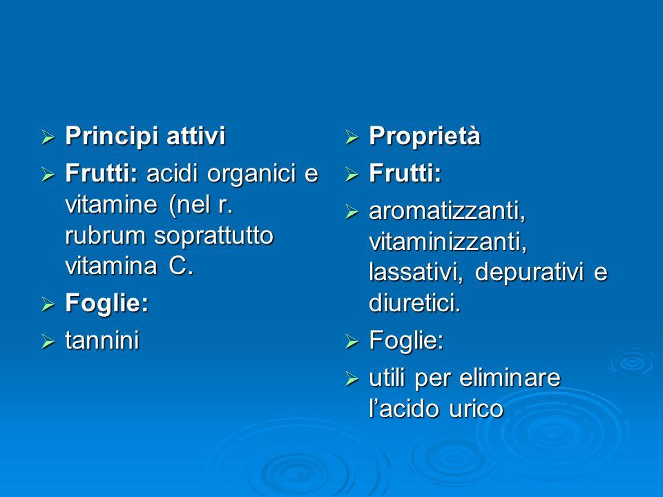 Principi attivi Frutti: acidi organici e vitamine (nel r. rubrum soprattutto vitamina C. Foglie: tannini.
