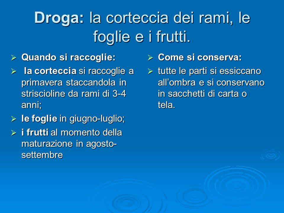 Droga: la corteccia dei rami, le foglie e i frutti.