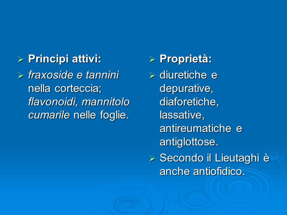 Principi attivi: fraxoside e tannini nella corteccia; flavonoidi, mannitolo cumarile nelle foglie. Proprietà: