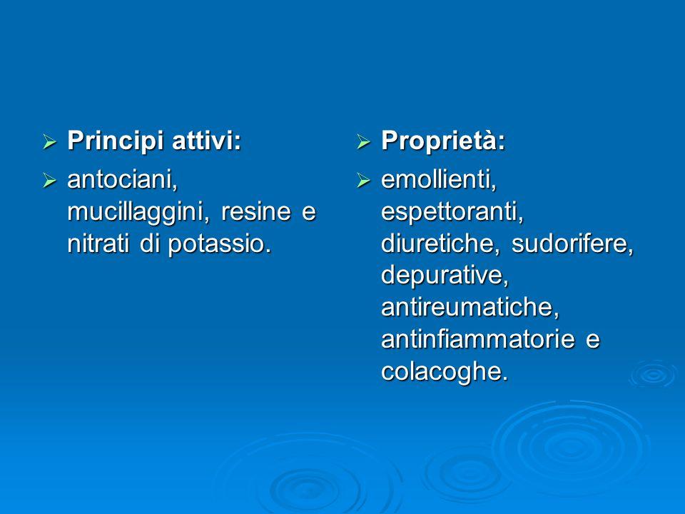 Principi attivi: antociani, mucillaggini, resine e nitrati di potassio. Proprietà: