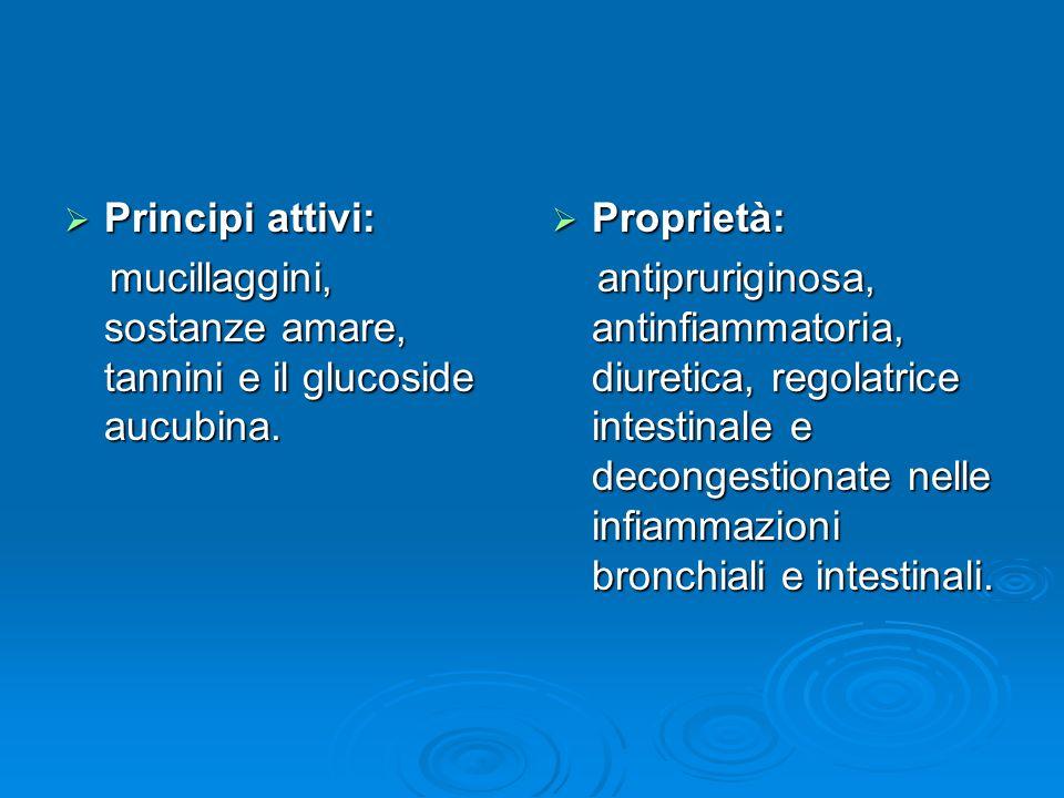 Principi attivi: mucillaggini, sostanze amare, tannini e il glucoside aucubina. Proprietà: