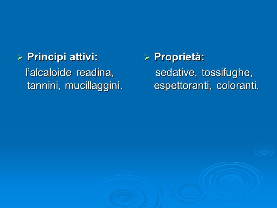 Principi attivi: l'alcaloide readina, tannini, mucillaggini.