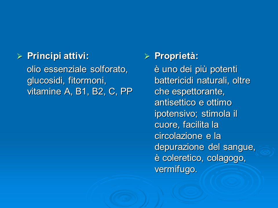 Principi attivi: olio essenziale solforato, glucosidi, fitormoni, vitamine A, B1, B2, C, PP. Proprietà: