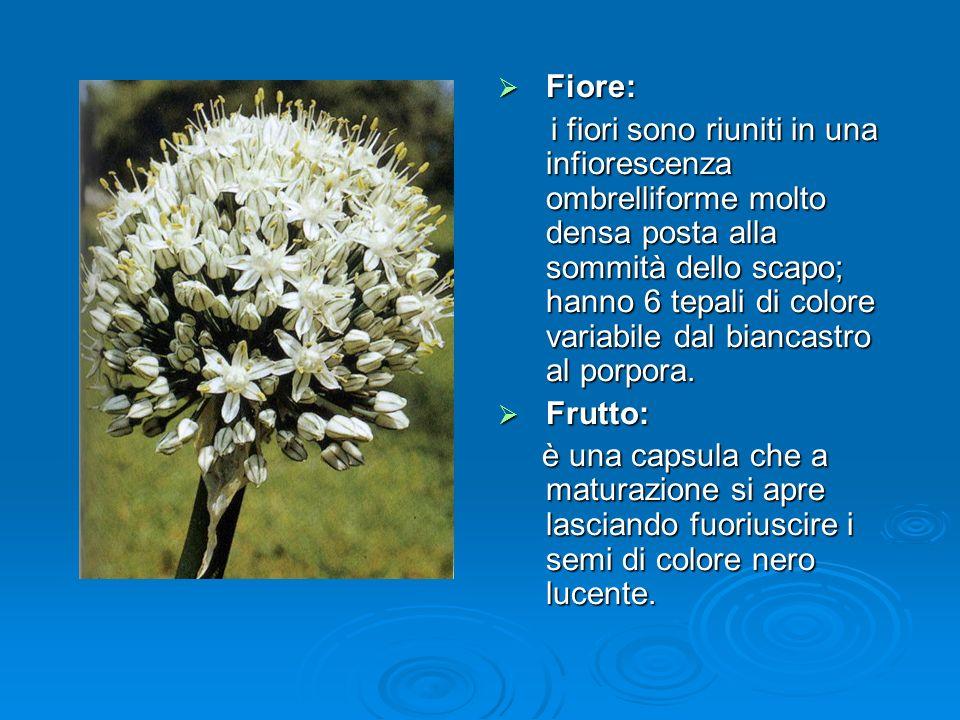 Fiore: