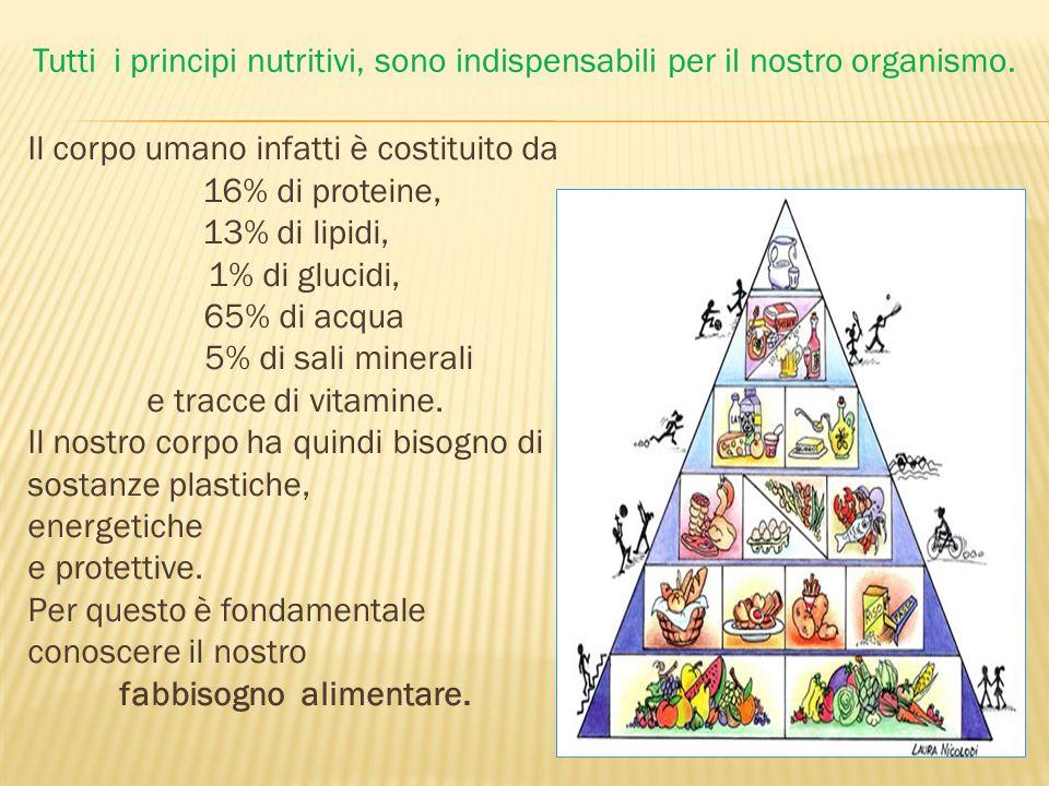 Tutti i principi nutritivi, sono indispensabili per il nostro organismo.