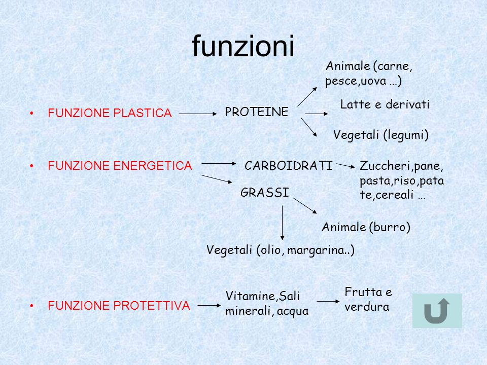 funzioni Animale (carne, pesce,uova …) FUNZIONE PLASTICA