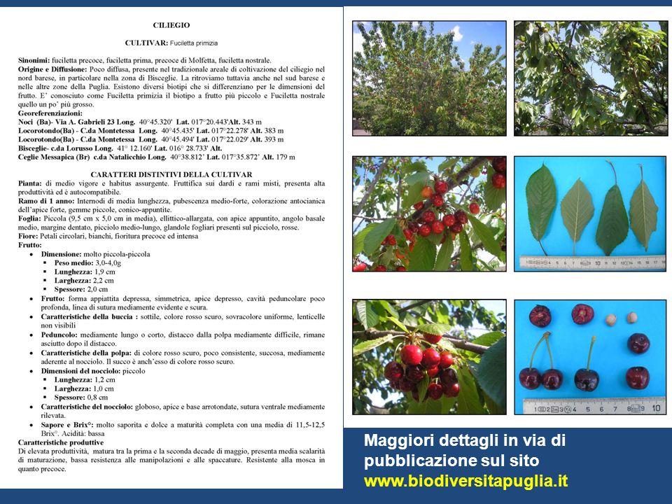 Maggiori dettagli in via di pubblicazione sul sito www