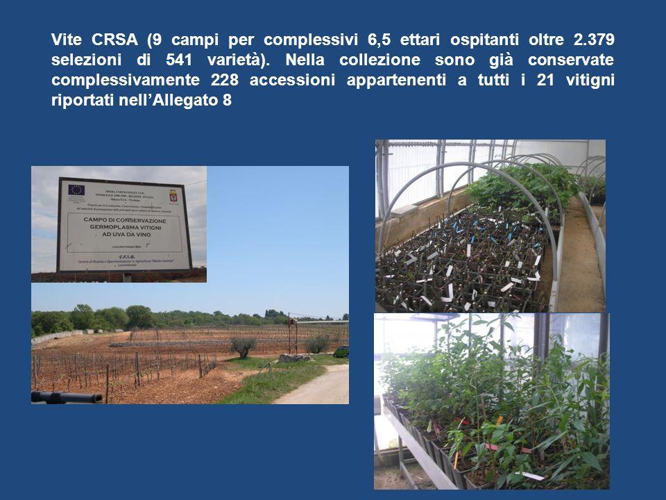 Vite CRSA (9 campi per complessivi 6,5 ettari ospitanti oltre 2