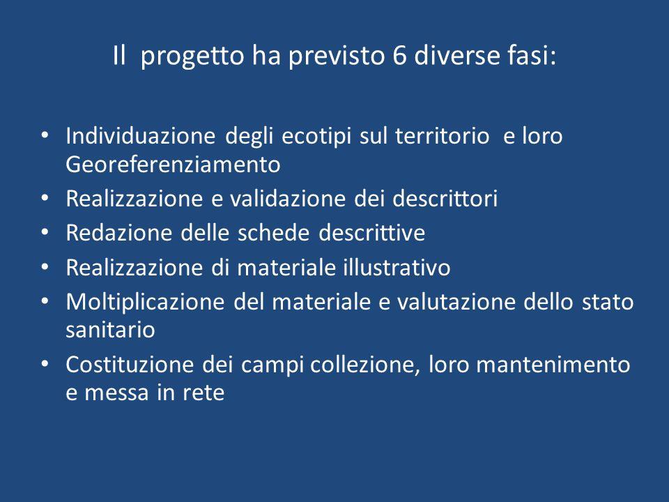 Il progetto ha previsto 6 diverse fasi: