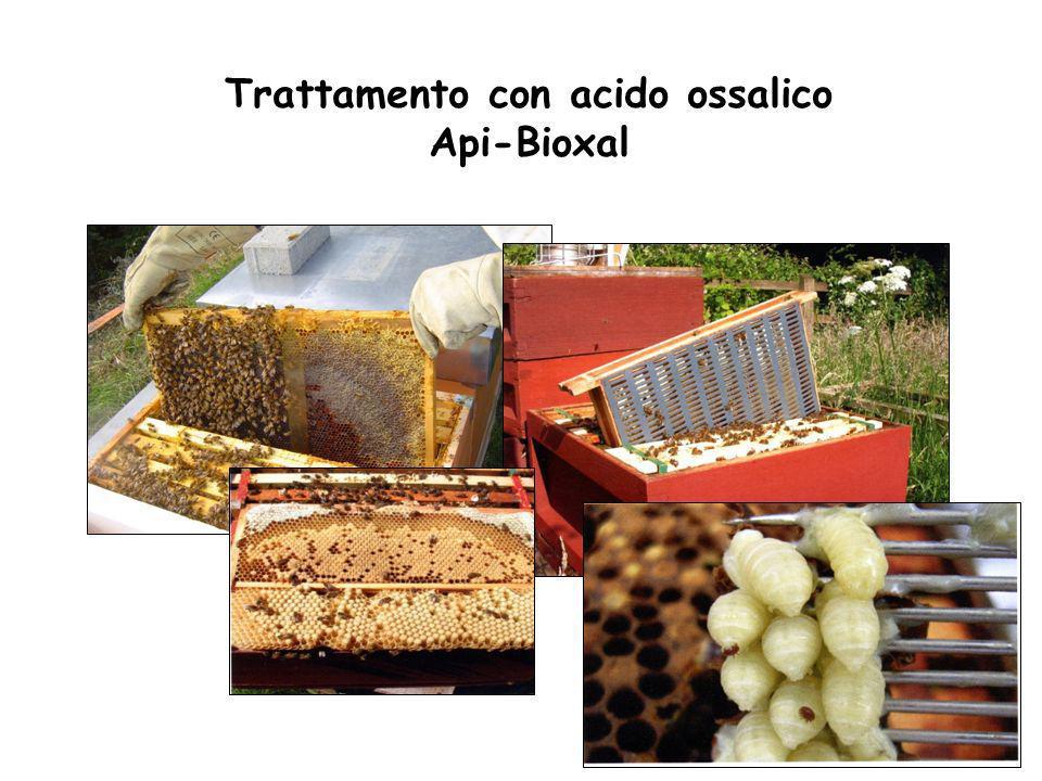 Trattamento con acido ossalico Api-Bioxal