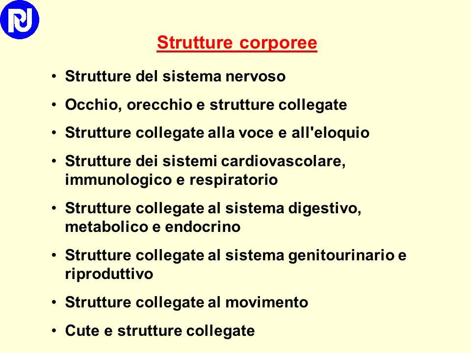 Strutture corporee Strutture del sistema nervoso