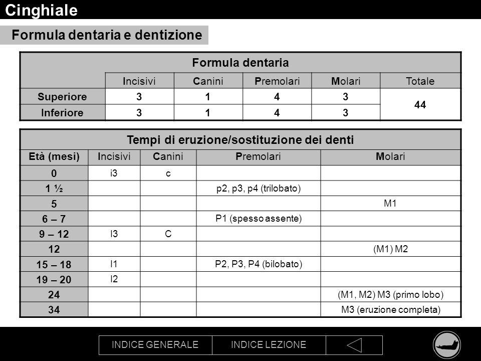 Tempi di eruzione/sostituzione dei denti