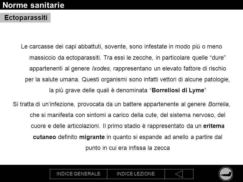 Norme sanitarie Ectoparassiti