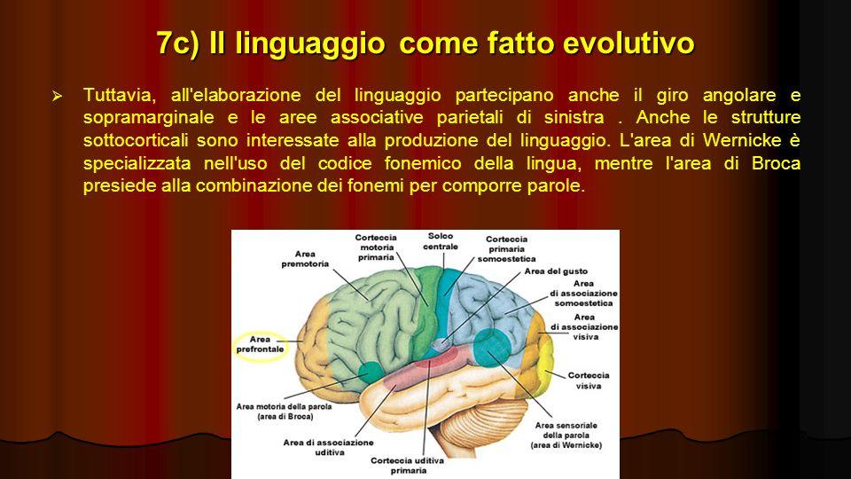 7c) Il linguaggio come fatto evolutivo