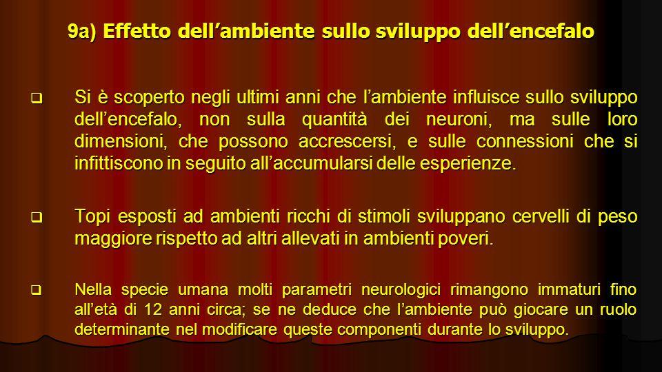 9a) Effetto dell'ambiente sullo sviluppo dell'encefalo