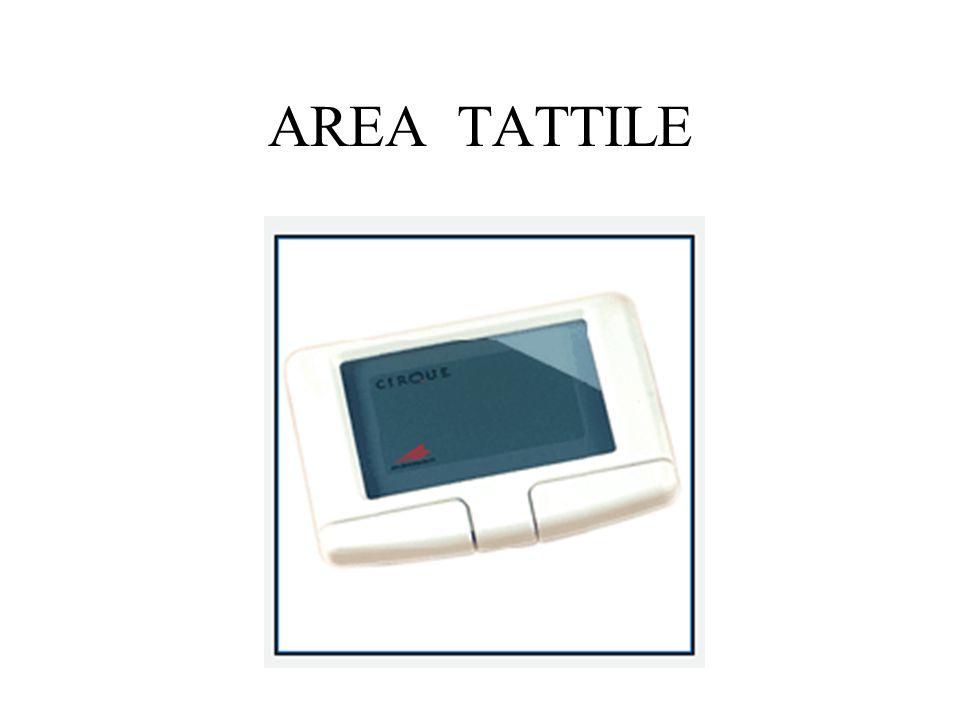 AREA TATTILE