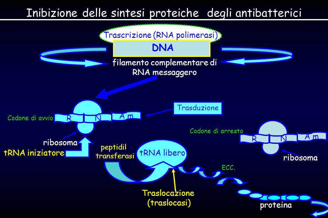 Inibizione delle sintesi proteiche degli antibatterici