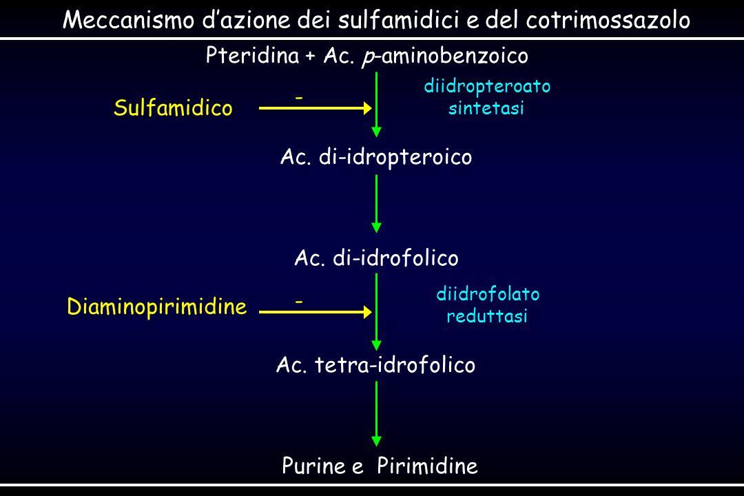 Pteridina + Ac. p-aminobenzoico