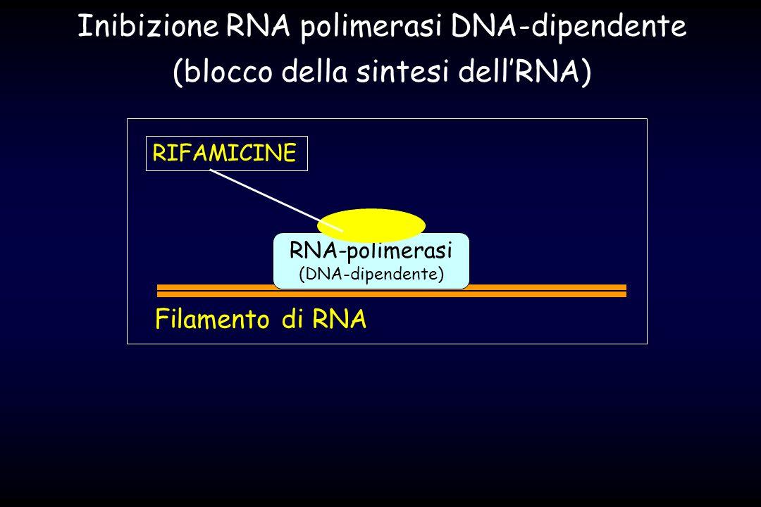 Inibizione RNA polimerasi DNA-dipendente
