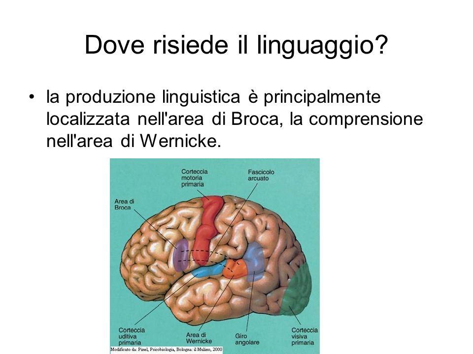 Dove risiede il linguaggio