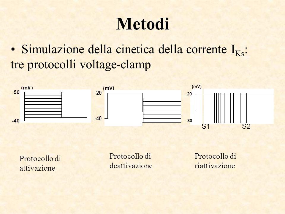 Metodi Simulazione della cinetica della corrente IKs: tre protocolli voltage-clamp. 20. -80. (mV)