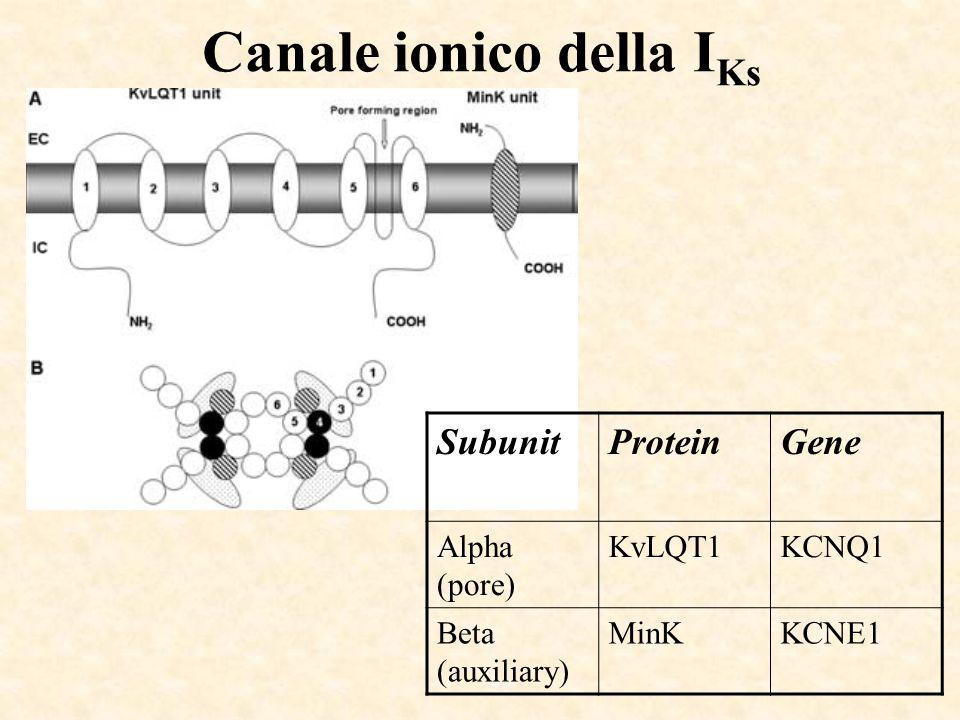 Canale ionico della IKs