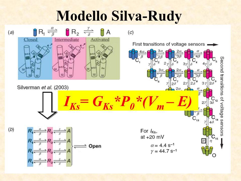 Modello Silva-Rudy IKs= GKs*P0*(Vm – E)