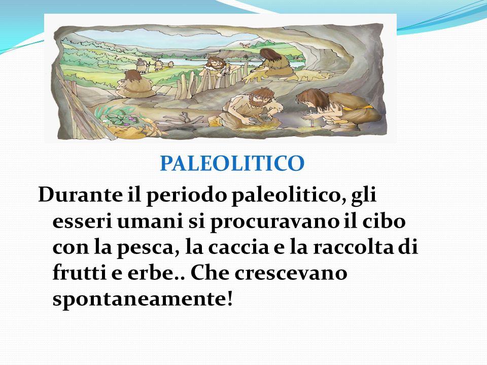 PALEOLITICO Durante il periodo paleolitico, gli esseri umani si procuravano il cibo con la pesca, la caccia e la raccolta di frutti e erbe..
