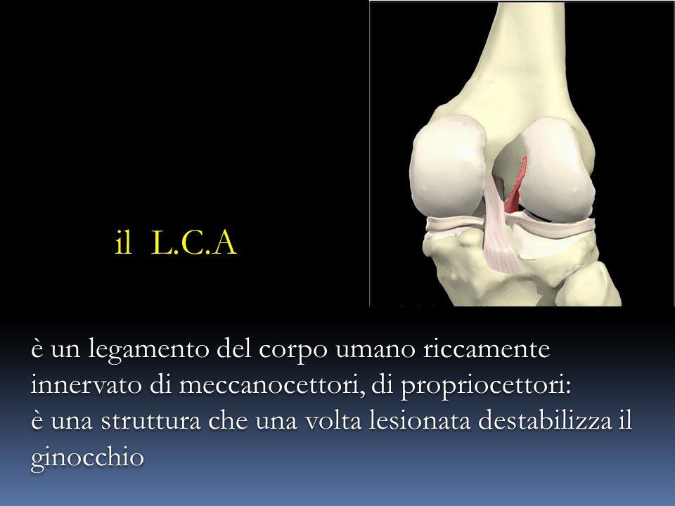 il L.C.A è un legamento del corpo umano riccamente innervato di meccanocettori, di propriocettori: è una struttura che una volta lesionata destabilizza il ginocchio