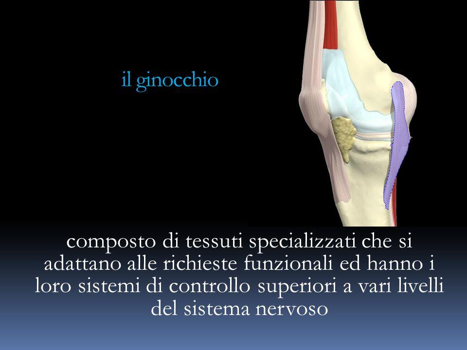 il ginocchio
