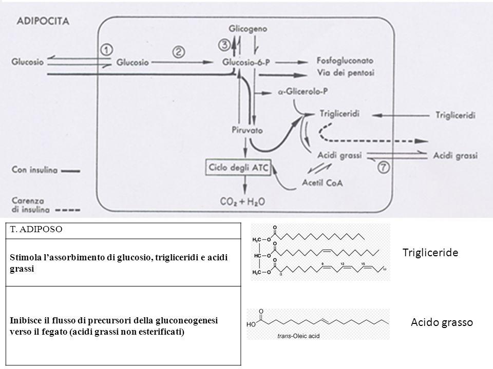 Trigliceride Acido grasso T. ADIPOSO
