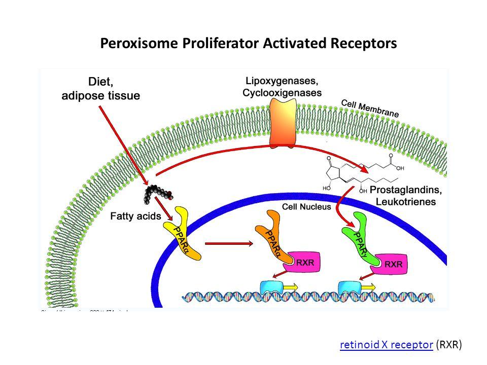 Peroxisome Proliferator Activated Receptors