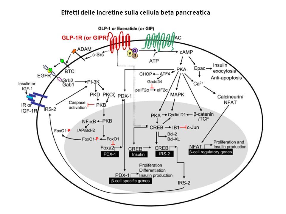 Effetti delle incretine sulla cellula beta pancreatica