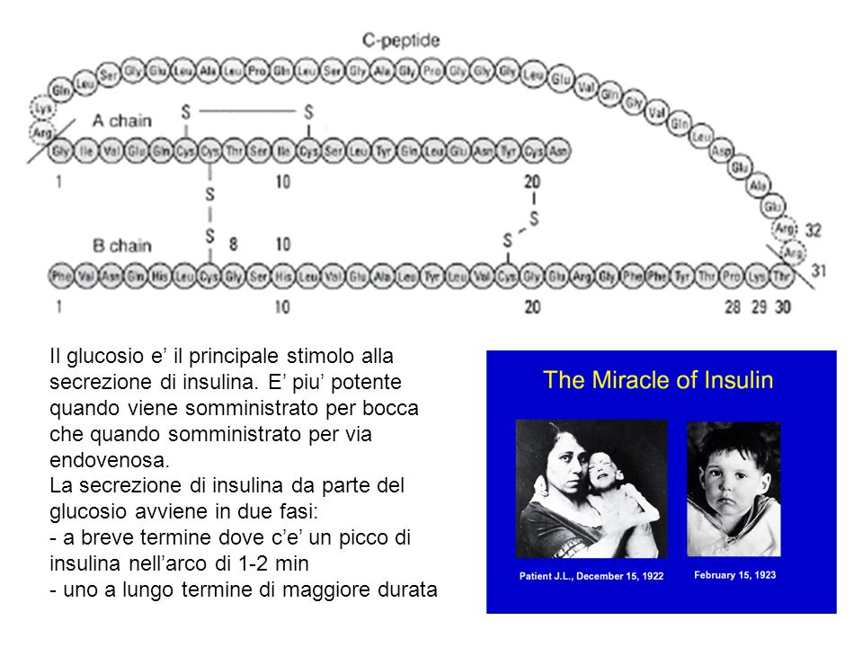 Il glucosio e' il principale stimolo alla secrezione di insulina