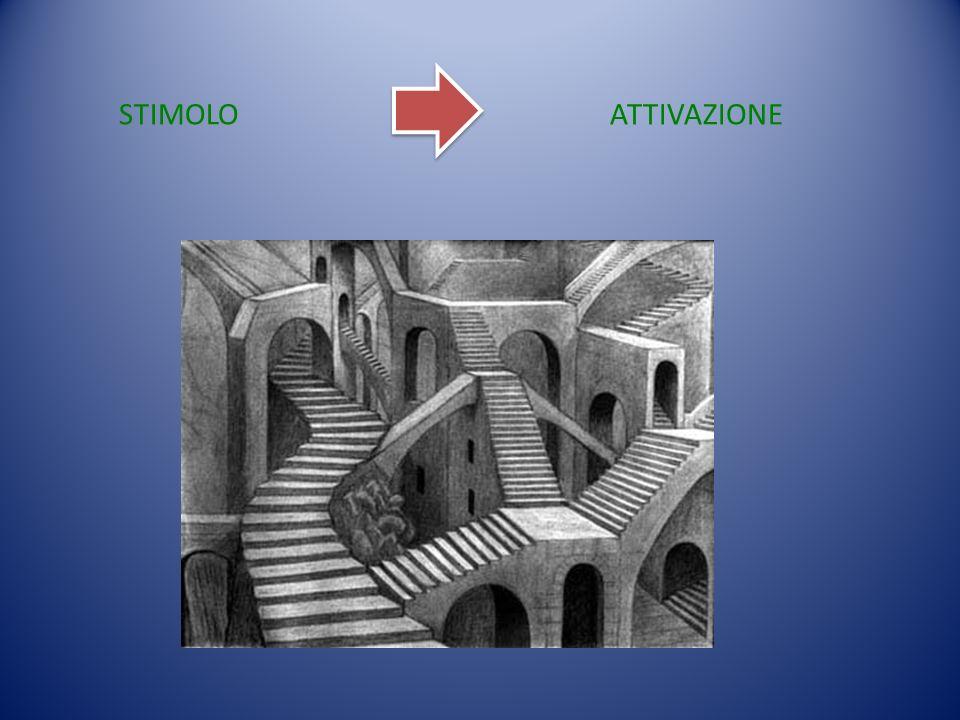 STIMOLO ATTIVAZIONE. Si pensa alla fRMI come ad un percorso che parte da uno stimolo per ottenere un'attivazione corticale.
