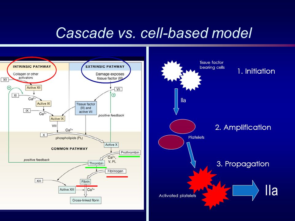 Cascade vs. cell-based model
