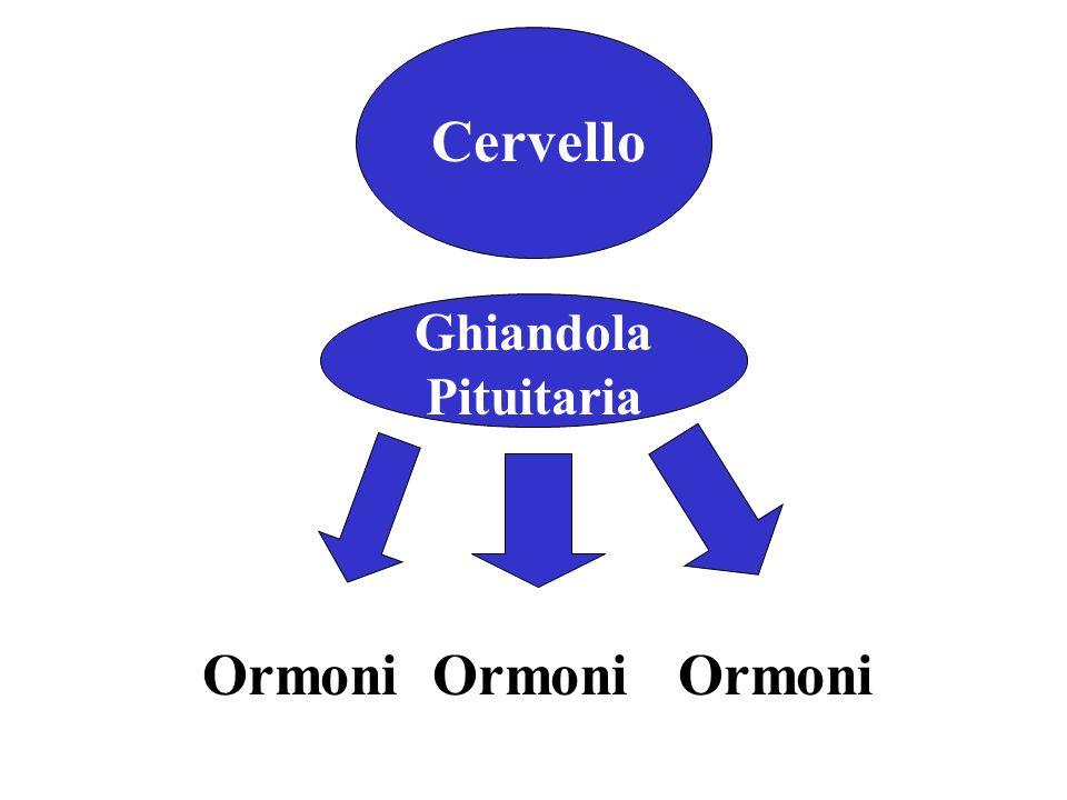 Cervello Ormoni Ormoni Ormoni