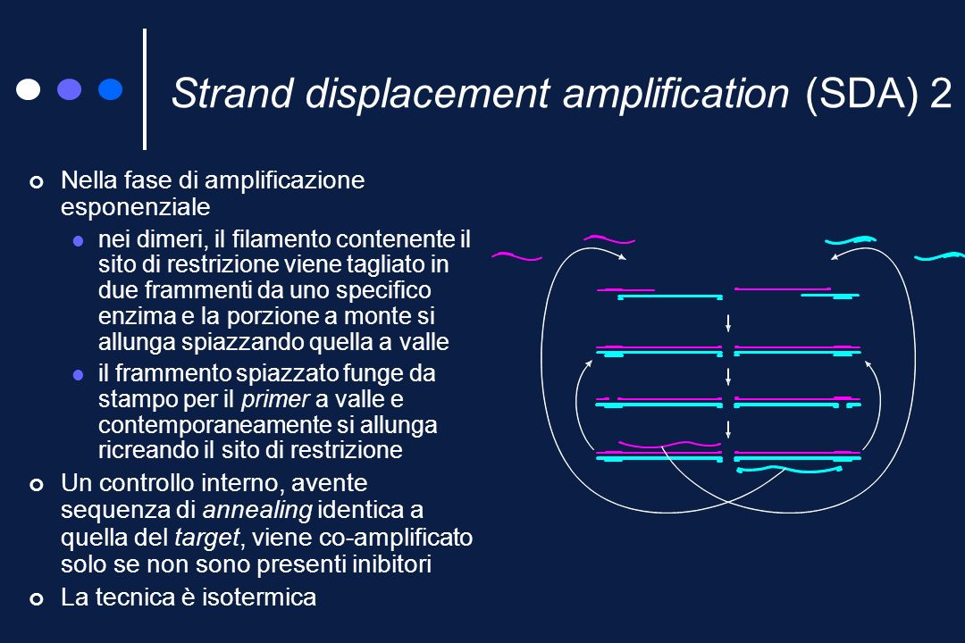 Strand displacement amplification (SDA) 2
