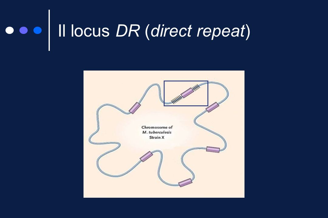 Il locus DR (direct repeat)