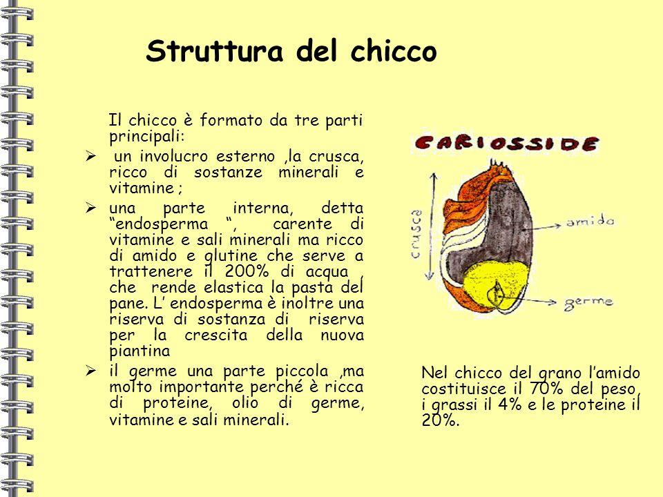 Struttura del chicco Il chicco è formato da tre parti principali: