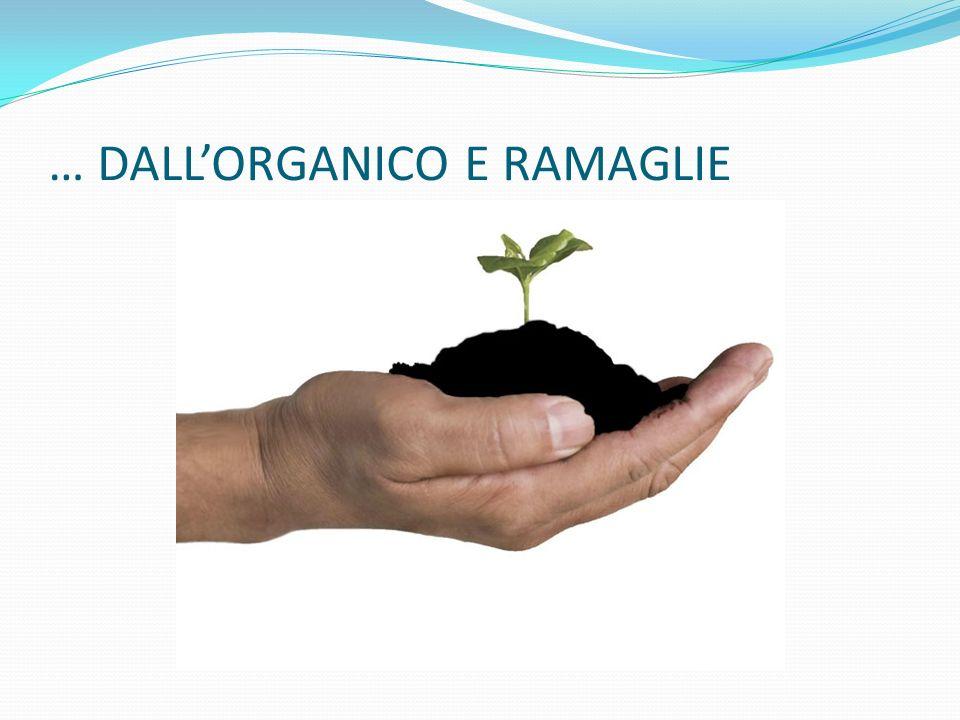 … DALL'ORGANICO E RAMAGLIE