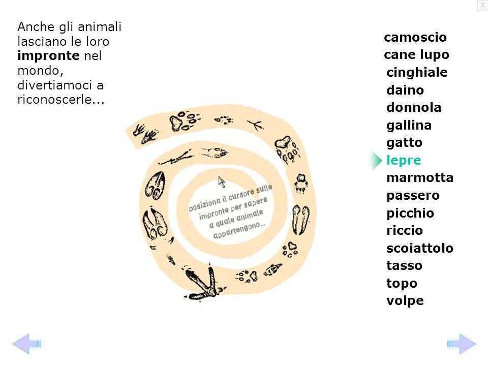 Anche gli animali lasciano le loro impronte nel mondo, divertiamoci a riconoscerle...