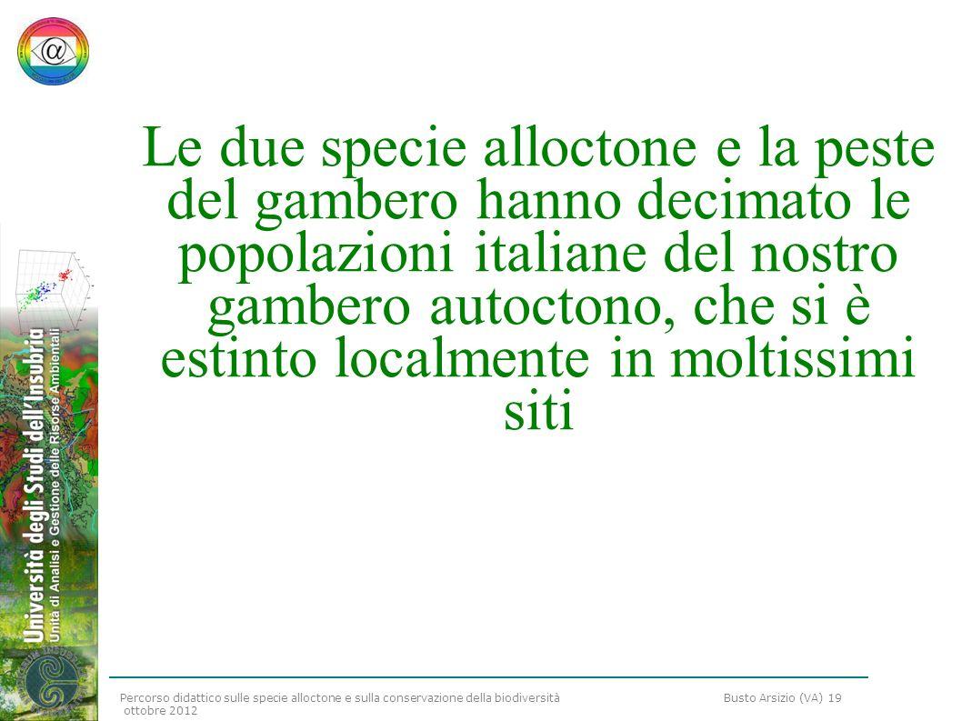 Le due specie alloctone e la peste del gambero hanno decimato le popolazioni italiane del nostro gambero autoctono, che si è estinto localmente in moltissimi siti