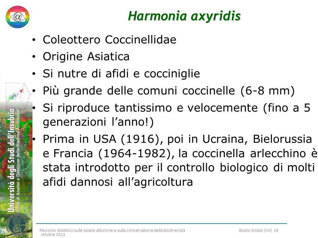 Harmonia axyridis Coleottero Coccinellidae Origine Asiatica