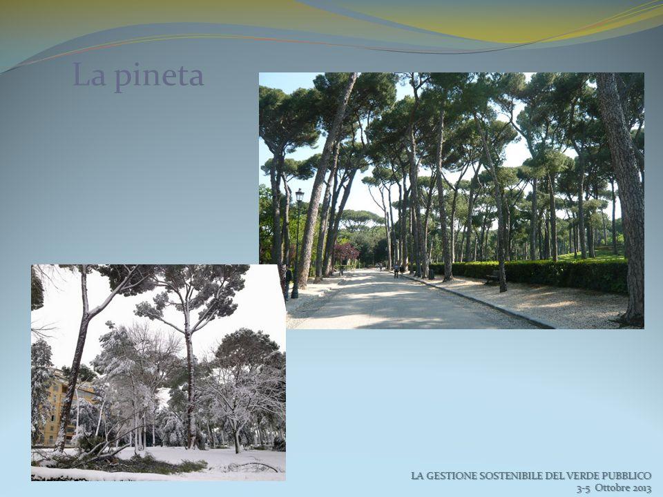 La pineta LA GESTIONE SOSTENIBILE DEL VERDE PUBBLICO 3-5 Ottobre 2013