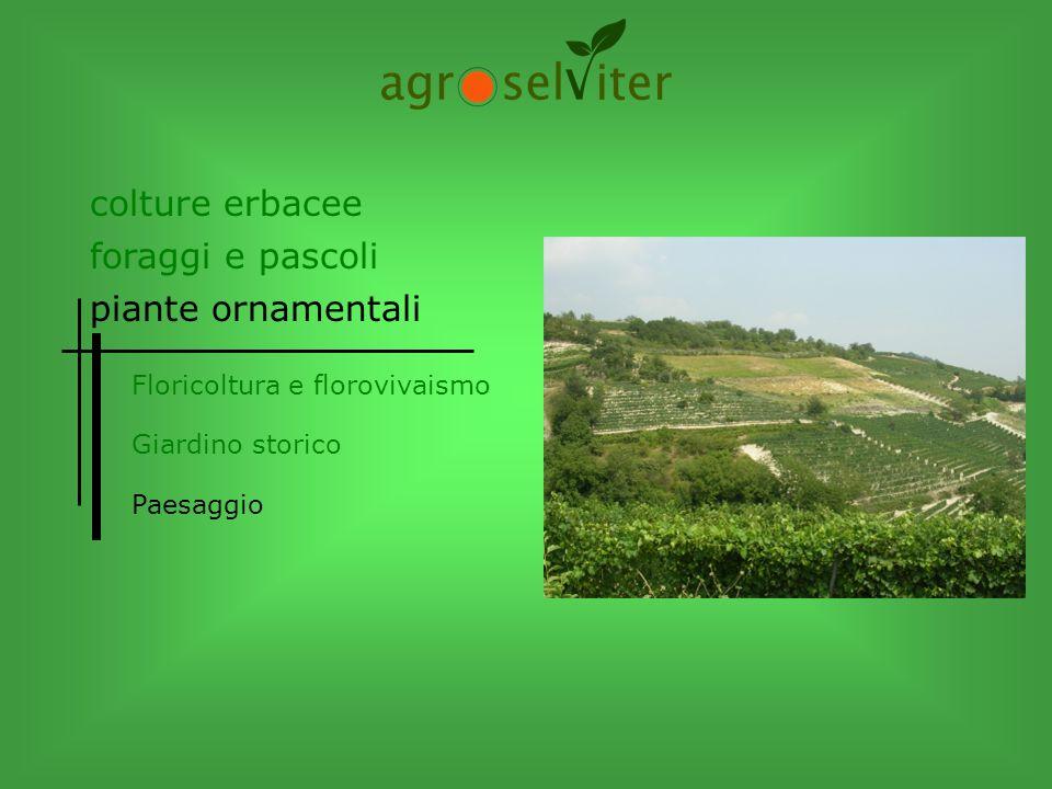 colture erbacee foraggi e pascoli piante ornamentali