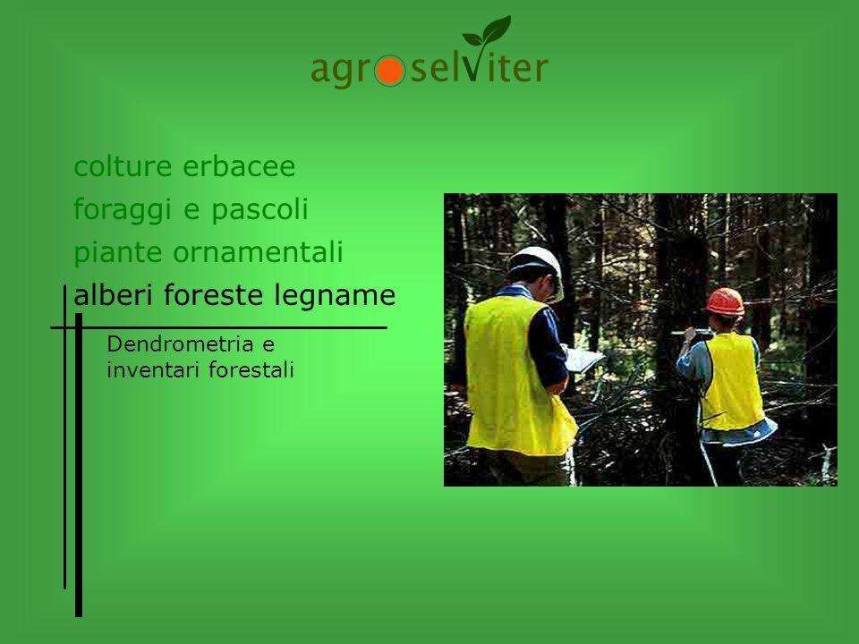 alberi foreste legname